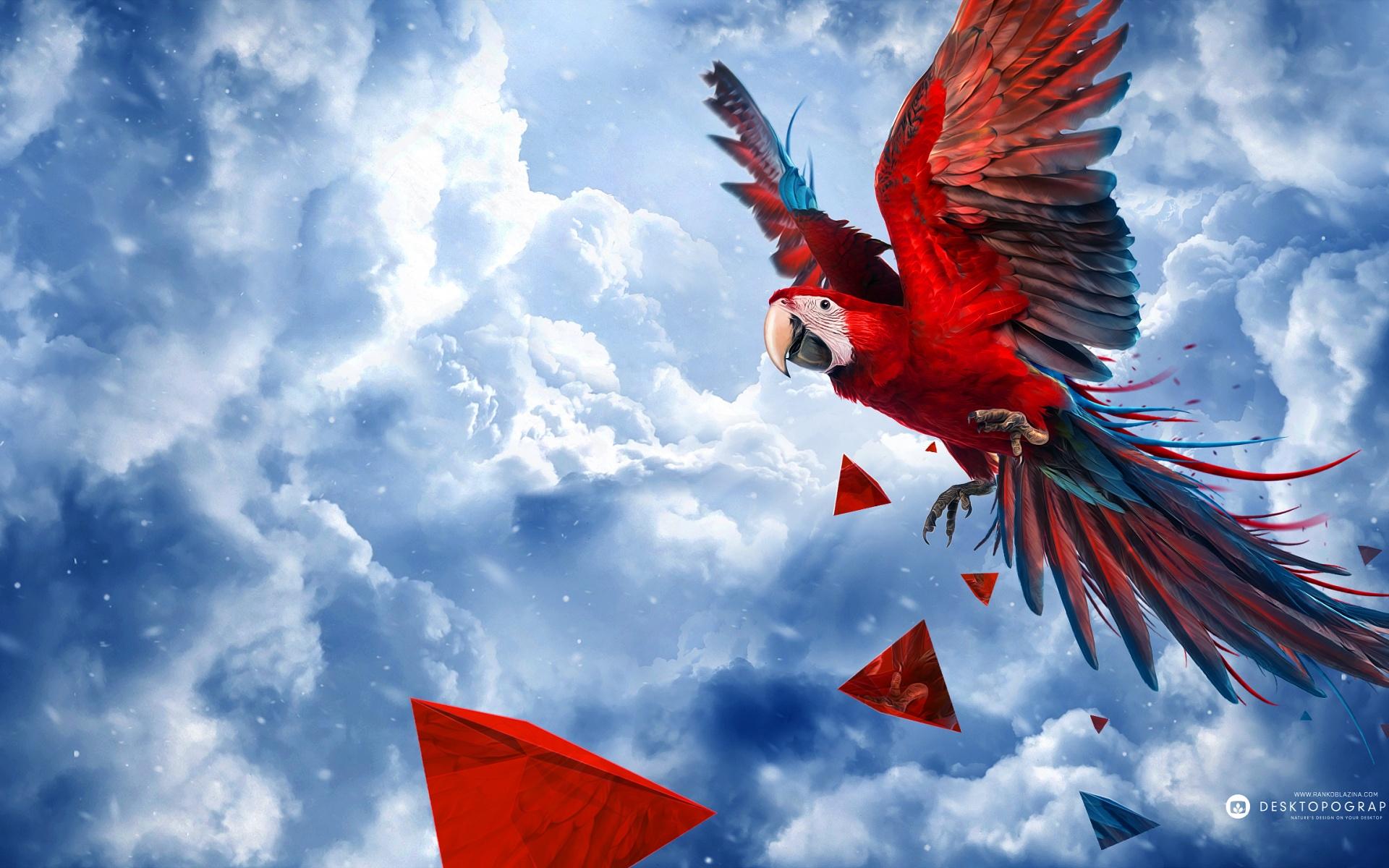 parrot blue sky wide